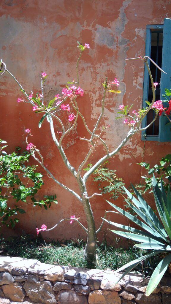 we-sisterhood-dakar-28-goree-fleur-mur-paysage